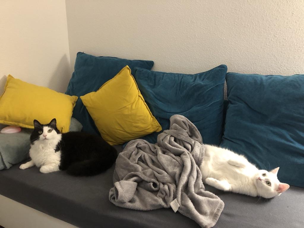 Le confinement 2, ne dérange pas les chats à ce que je vois !