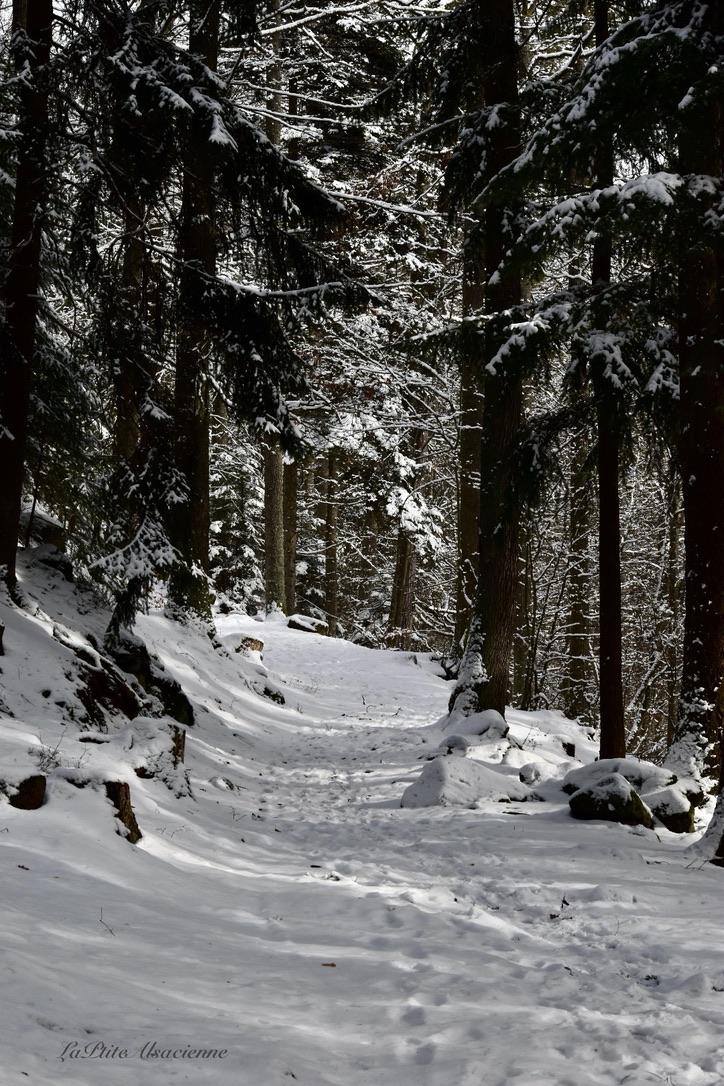 Départ parking bas du château du Haut-Koenigsbourg - sous la neige. Photo by LaPtiteAlsacienne - Cendrine Miesch