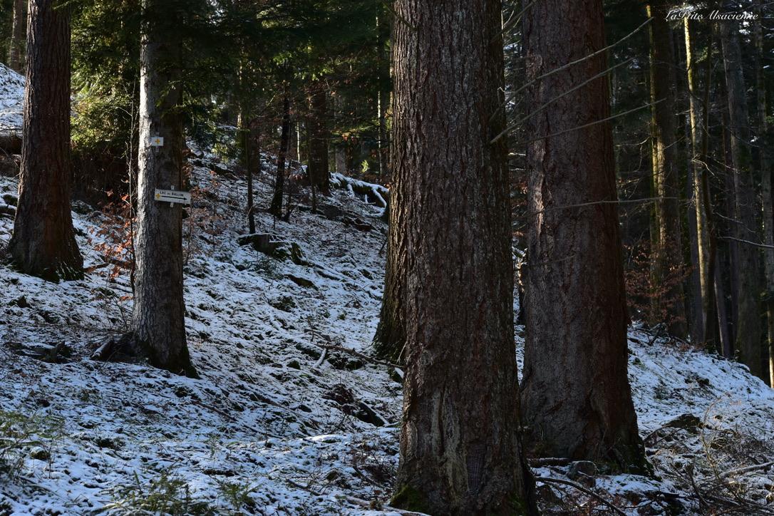 Chemin forestier qui se transforme en sentier, direction le Lac du Ballon croix jaune - Photo de Cendrine Miesch dite LaPtiteAlsacienne