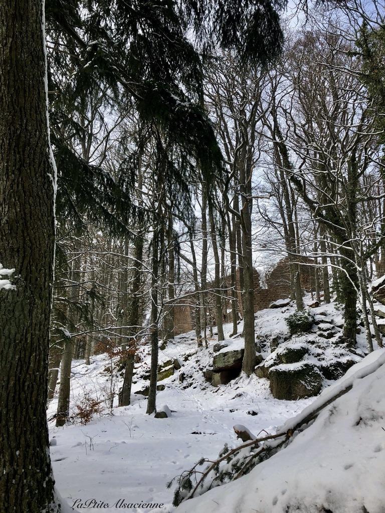 Au bout du chemin... Au détour des arbres... Les ruines de l'oedenbourg apparaissent. Photo by LaPtiteAlsacienne Cendrine Miesch
