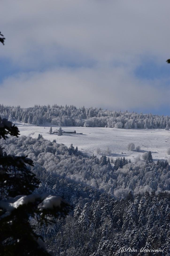 Photo réalisée dans la vallée de Murbach - En montant vers les ruines du Hohrupf - Janvier 2021 - Cendrine Miesch dite LaPtiteAlsacienne
