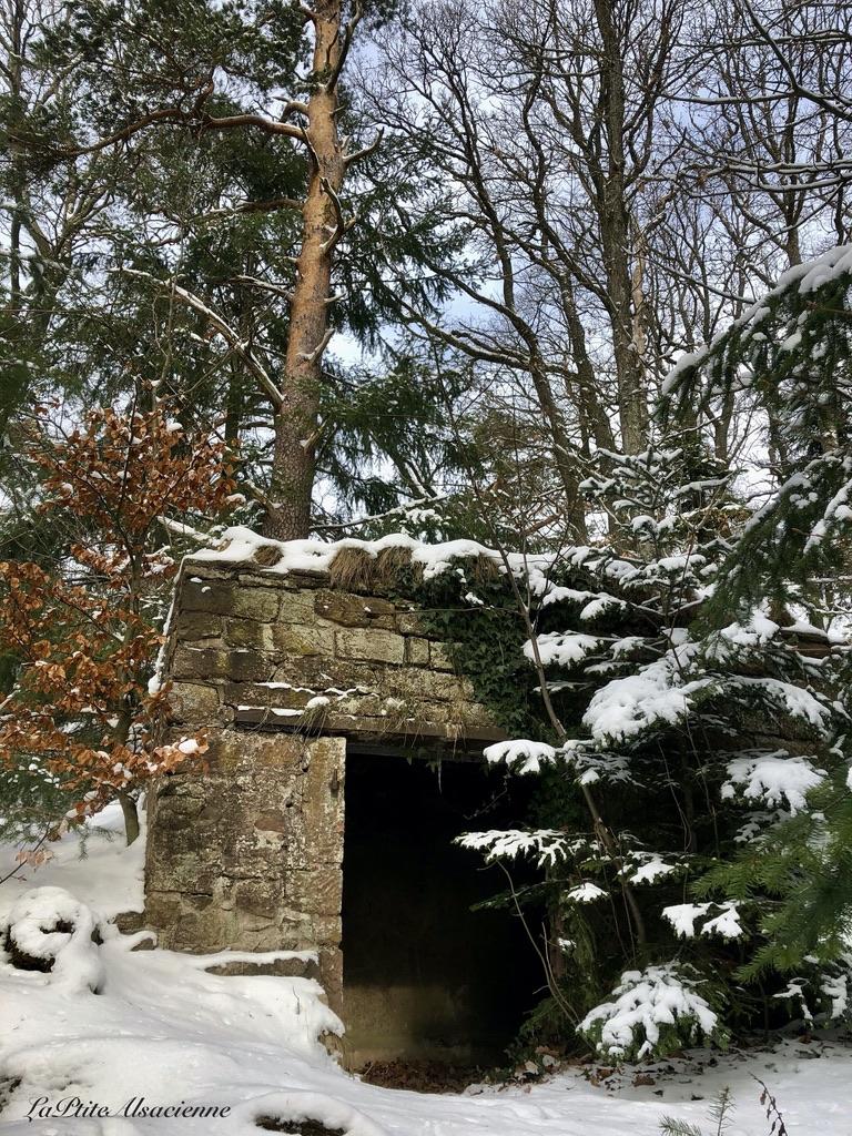 A côté des ruines du château de l'oedenbourg connu sous le nom du petit koenigsbourg - photo by Cendrine Miesch dite LaPtiteAlsacienne