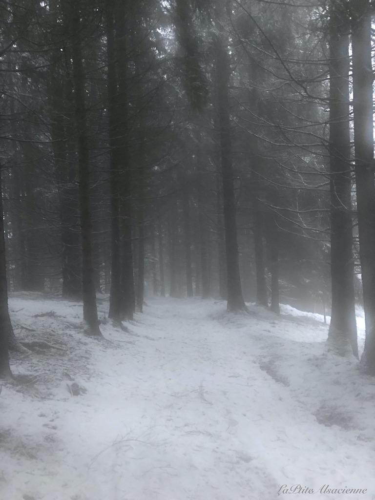 Chemin forestier après la ferme auberge du Gustiberg - Photo by LaPtiteAlsacienne