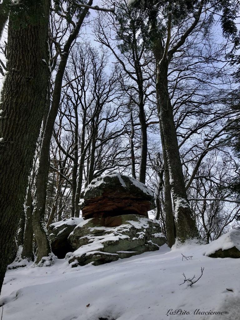 Rocher non loin de la ruine de l'oedenbourg et du haut koenigsbourg - Photo par Cendrine Miesch dite LaPtiteAlsacienne