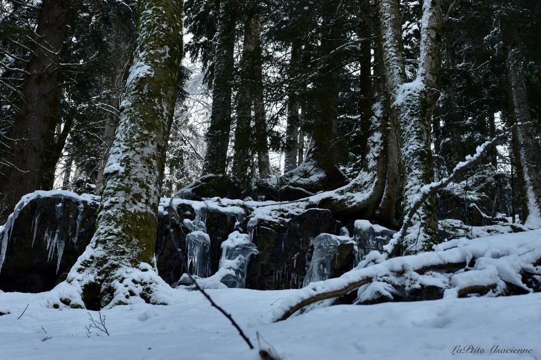 De la glace, de la roche, des arbres et de la neige. Montée de la Cascade du Seebach avant d'arriver au Lac du Ballon. Photo by Cendrine Miesch - LaPtiteAlsacienne