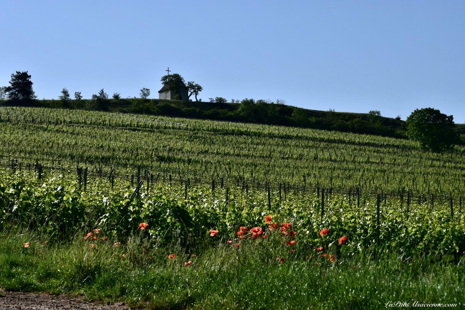 Chapelle du Bollenberg vue du bas du vignoble de Orschwihr - Photo by LaPtiteAlsacienne Cendrine Miesch