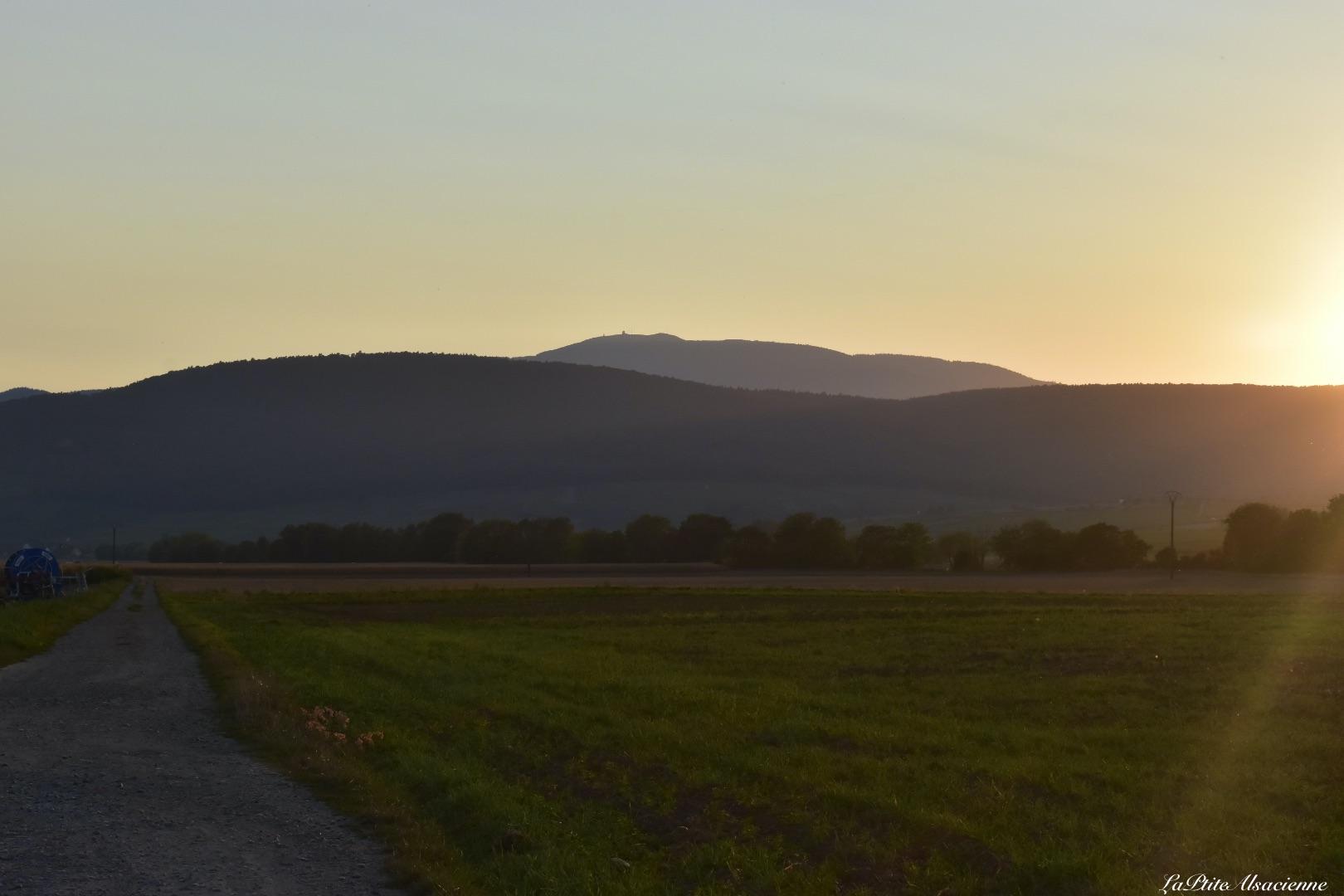 Coucher de soleil dans le vignoble sur le Grand Ballon - Alsace - Grand Est