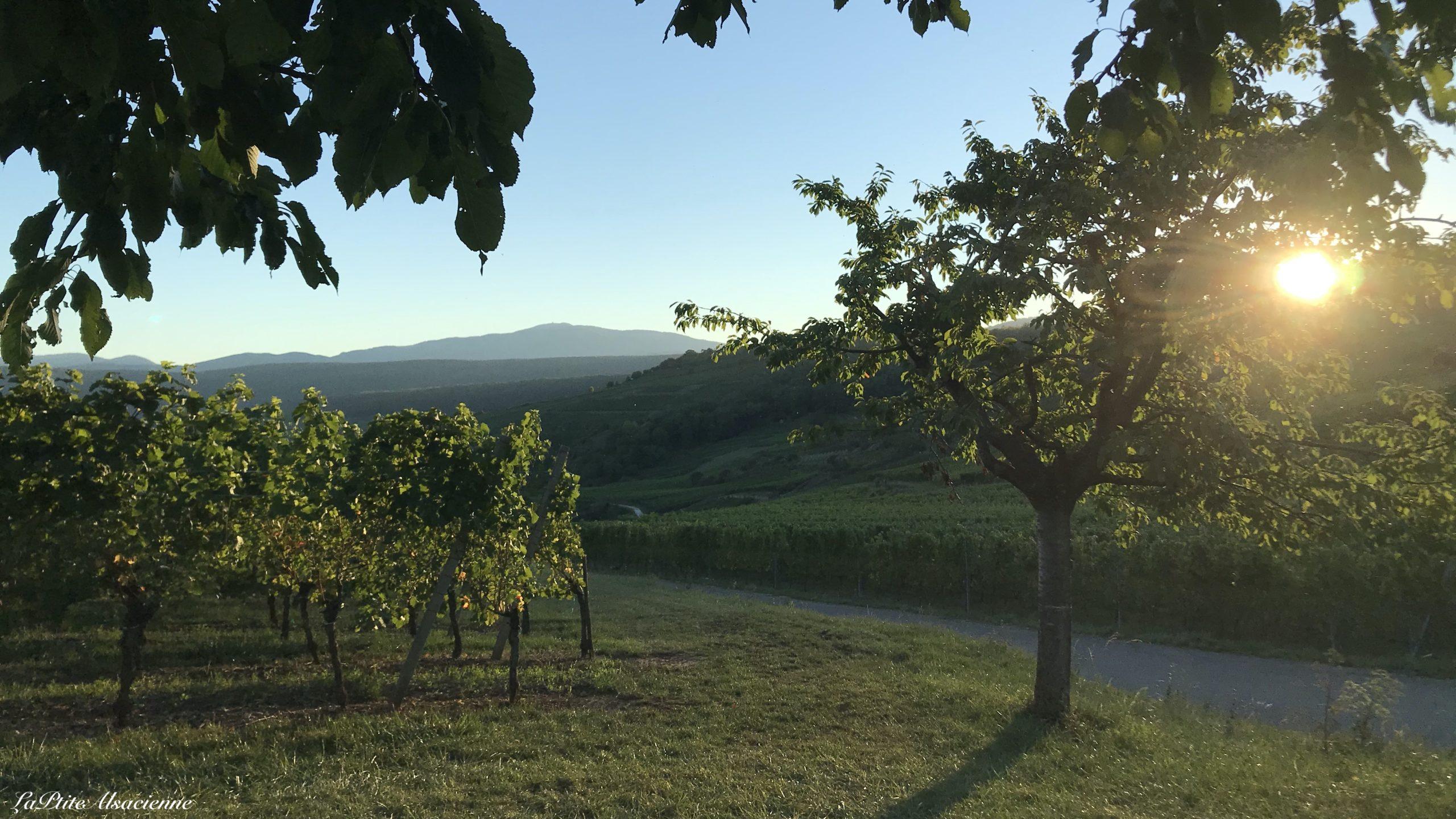 Magnifique coucher de soleil sur le vignoble alsacien, et vue sur le Grand Ballon - Photo by Cendrine Miesch dite LaPtiteAlsacienne