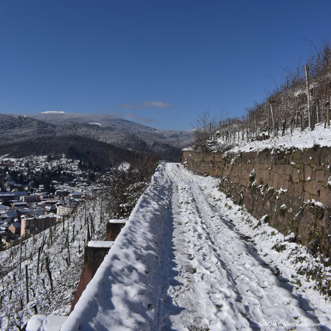 Vignoble de Guebwiller sous la neige - 11 février 2021 - Photo by Cendrine Miesch dite LaPtiteAlsacienne