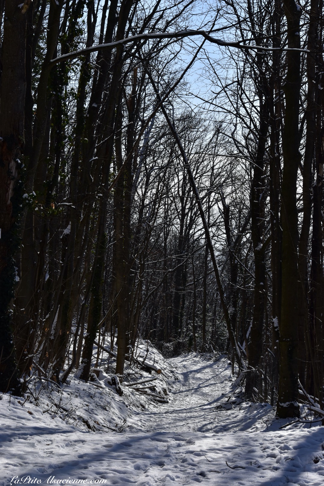 Chemin dans la forêt, au dessus du Vignoble de Guebwiller - Photo by Cendrine Miesch dite LaPtiteAlsacienne