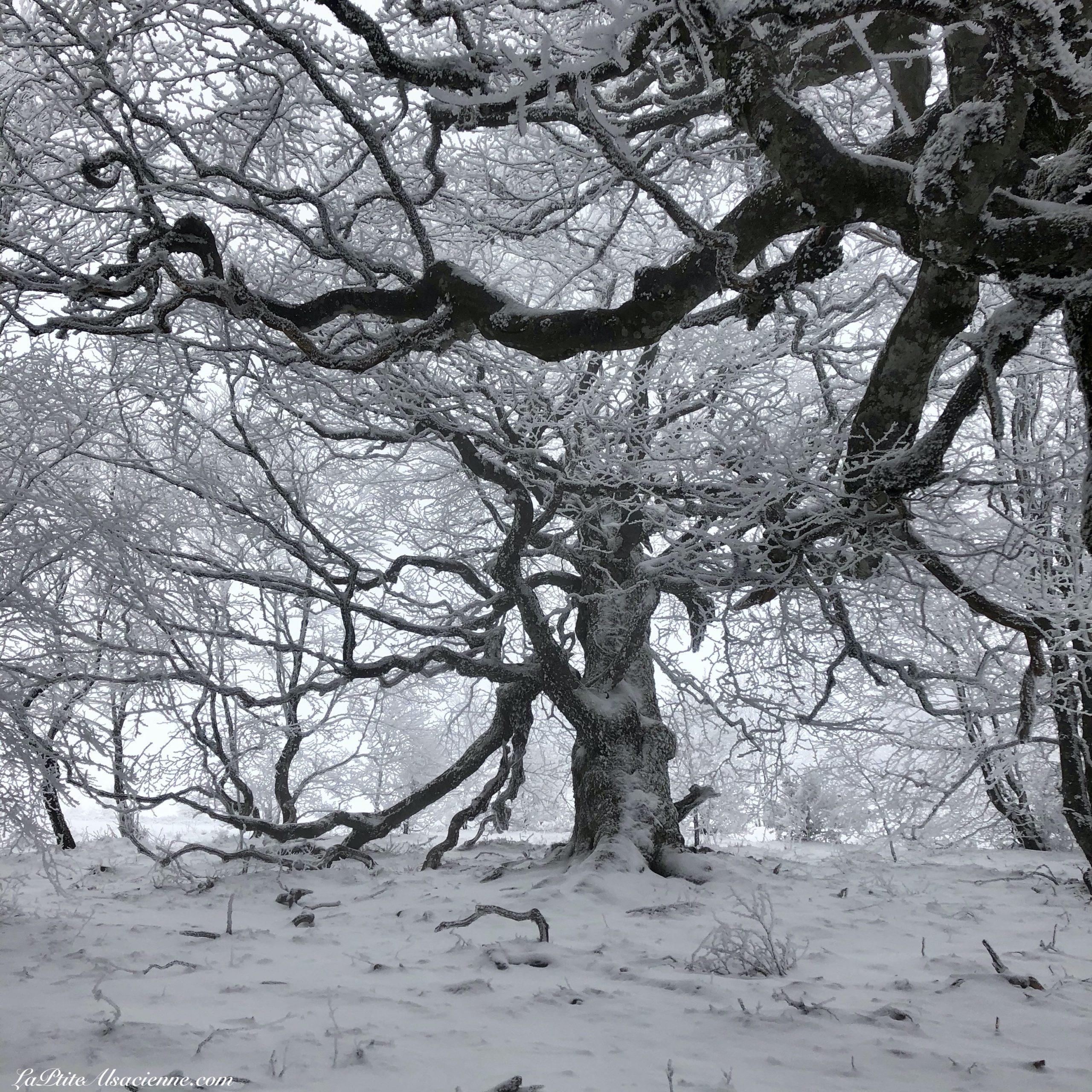 une ambiance féérique grâce à la neige au Markstein - Photo du 8 février 2021 par Cendrine Miesch dite LaPtiteAlsacienne
