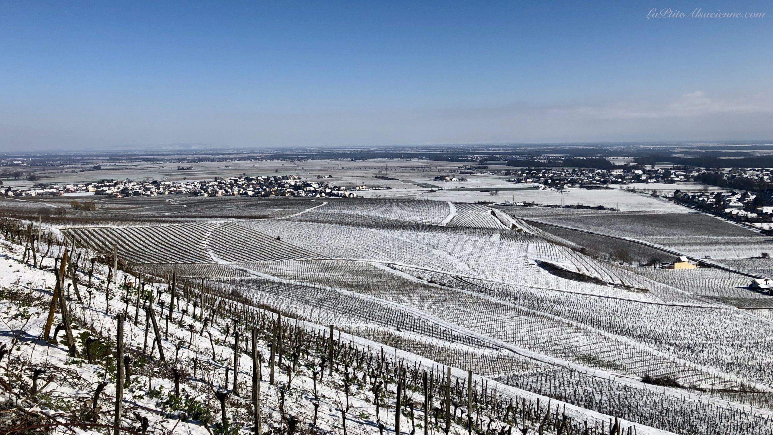 Vignoble de Guebwiller sous la neige - Photo de Cendrine Miesch dite LaPtiteAlsacienne