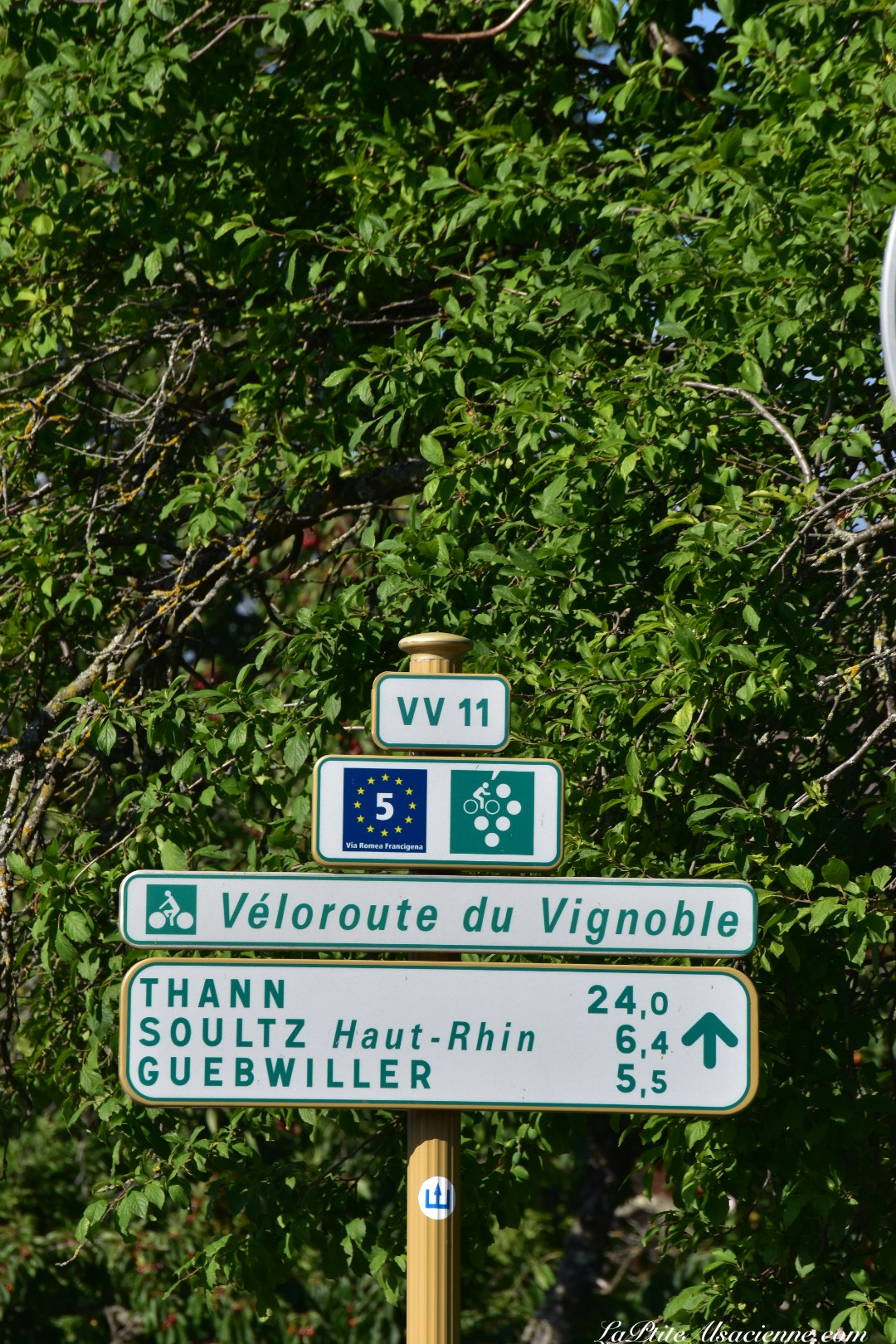 Les pistes cyclables en Alsace, sur la route des vins - Photo by Cendrine Miesch dite LaPtiteAlsacienne