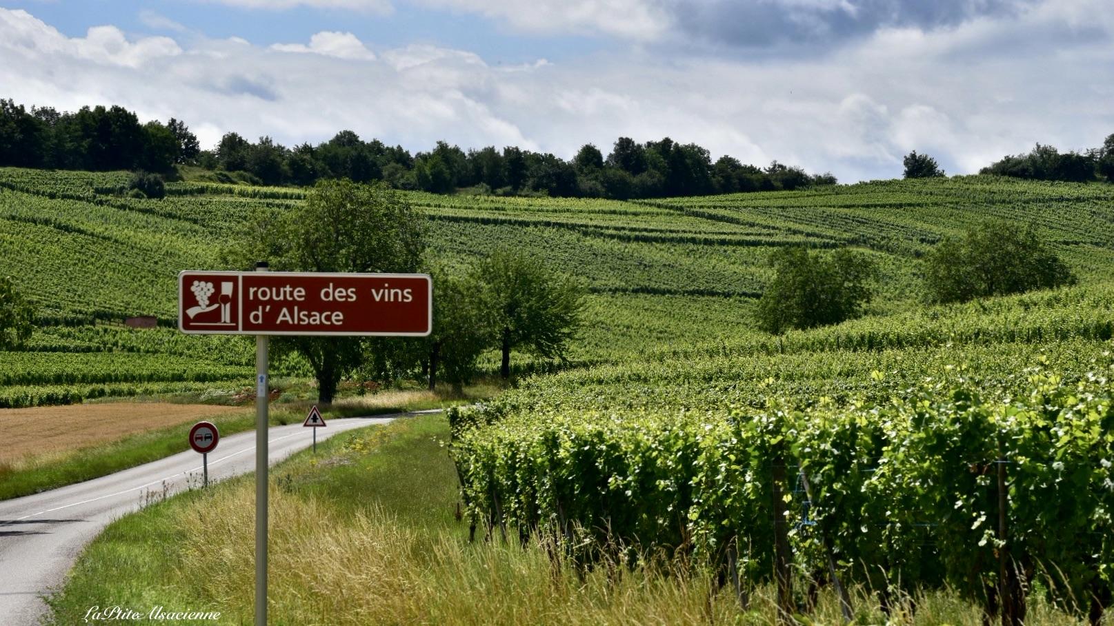 Route des vins depuis Soultzmatt en direction d'Orschwihr - Photo de Cendrine Miesch