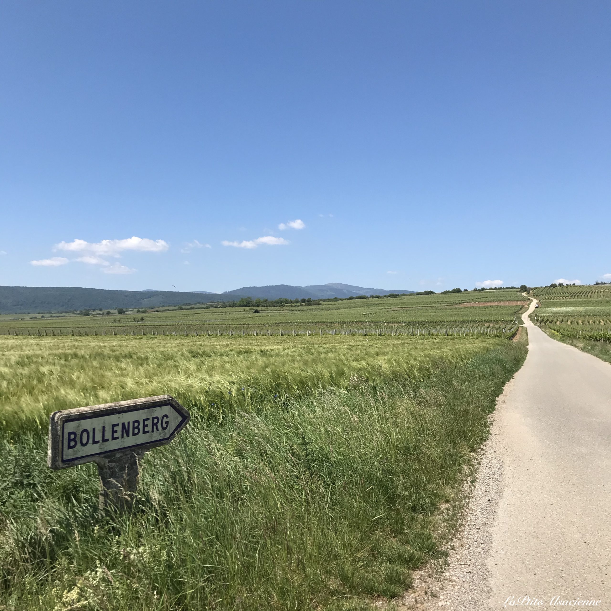 Entre champs et vignoble, au loin la Chapelle du Bollenberg  et le Petit Ballon - Photo by Cendrine Miesch dite LaPtiteAlsacienne