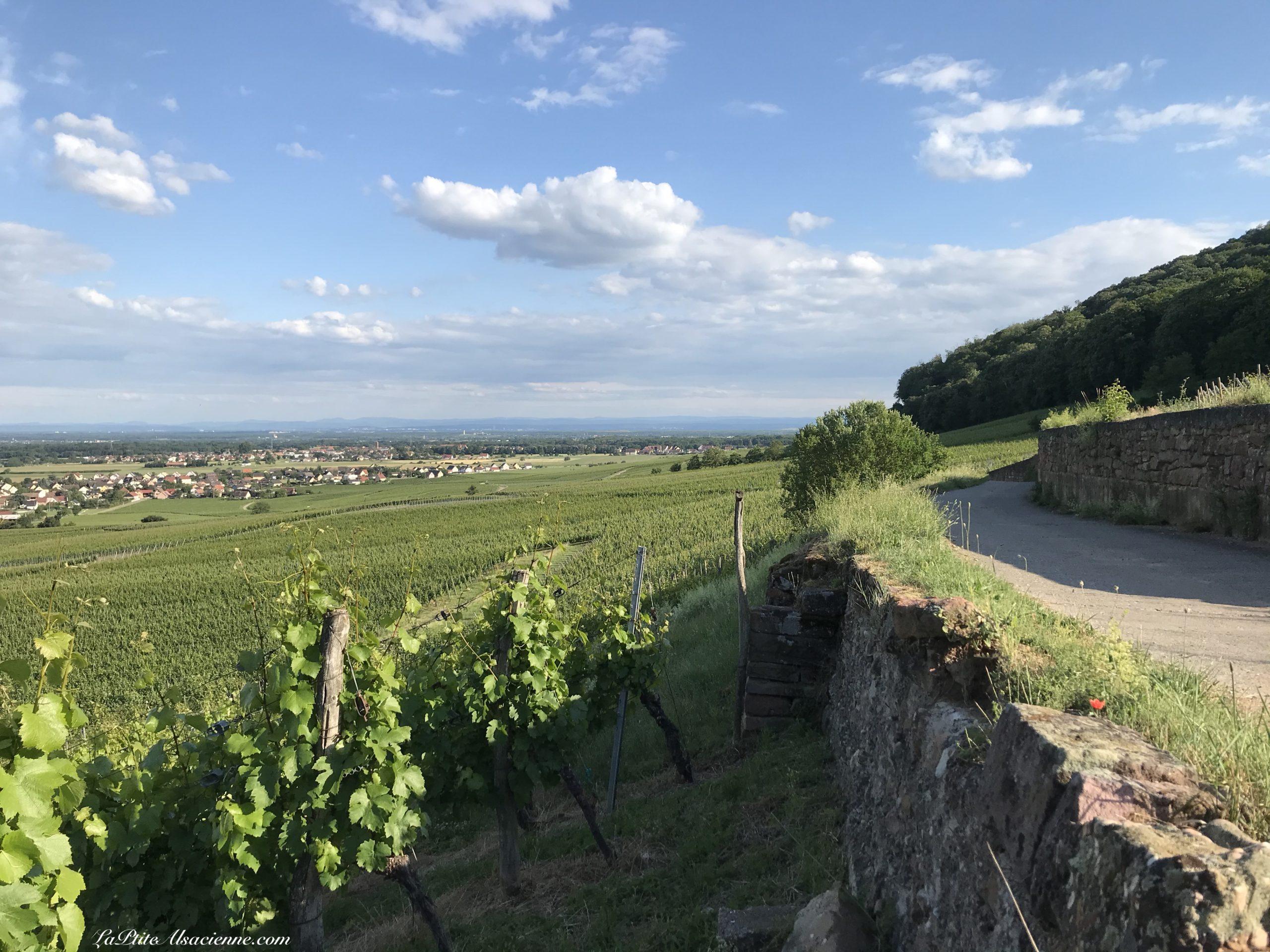Vignoble des vins d'Alsace - Photo by Cendrine Miesch dite LaPtiteAlsacienne