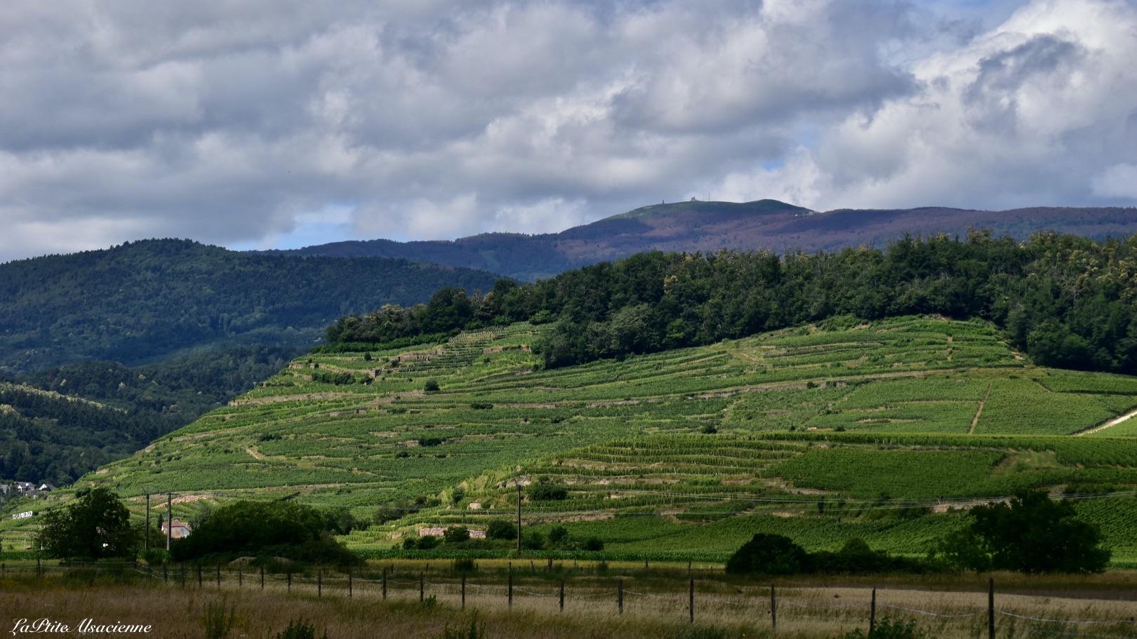 Vignoble estival et Grand Ballon, vue sur la vallée de Guebwiller - Photo by Cendrine Miesch dite LaPtiteAlsacienne