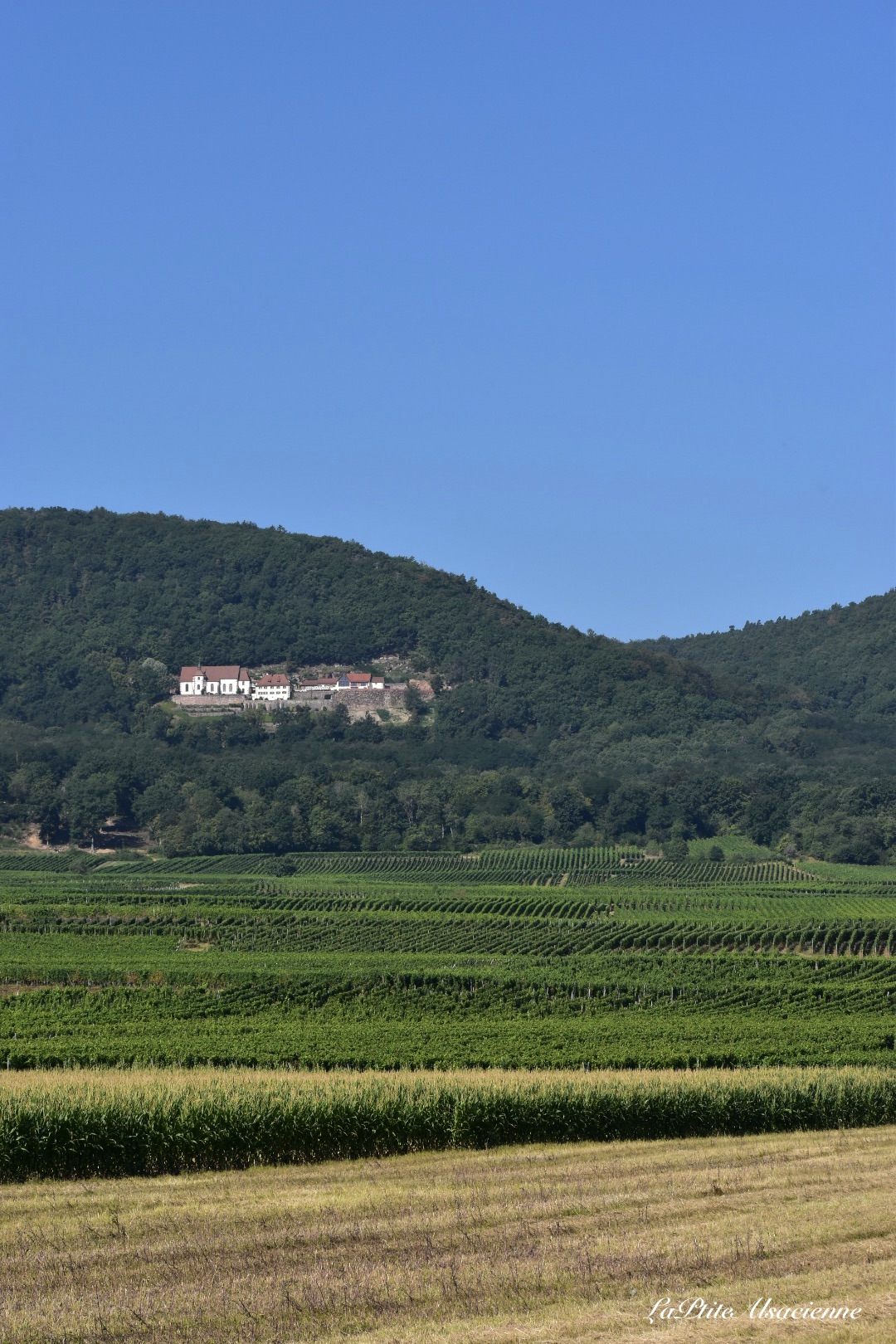 Entre champs, vignoble et montagne, le Schauenberg surplombe la plaine d'Alsace au dessus de Pfaffenheim - Cendrine Miesch dite LaPtiteAlsacienne