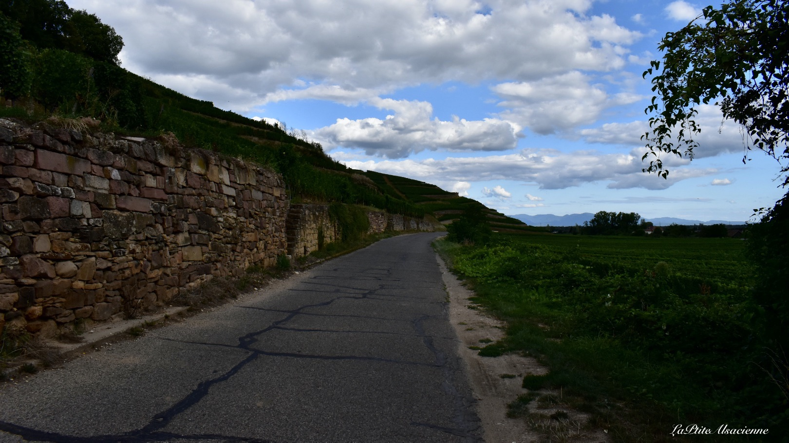 Piste cyclable et route de vignoble depuis Westhalten - Photo de Cendrine Miesch dite LaPtiteAlsacienne