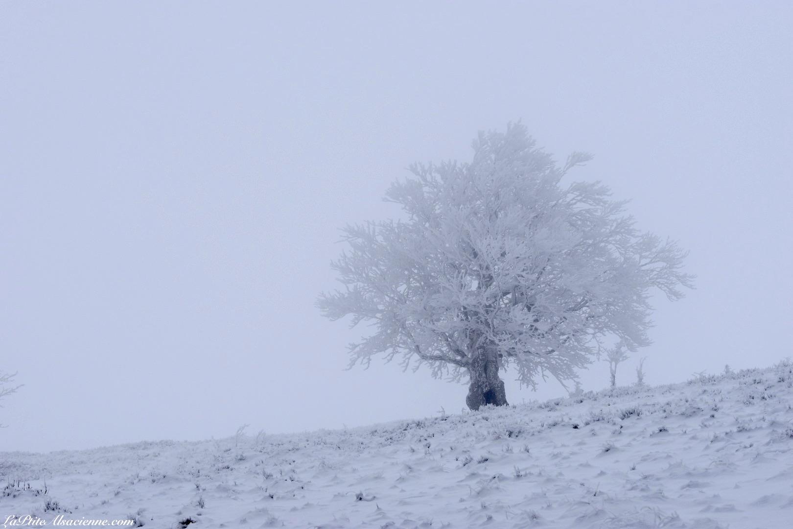 arbre gelé sur les hauteurs entre le Markstein et le Grand Ballon - Photo by LaPtiteAlsacienne - Cendrine Miesch
