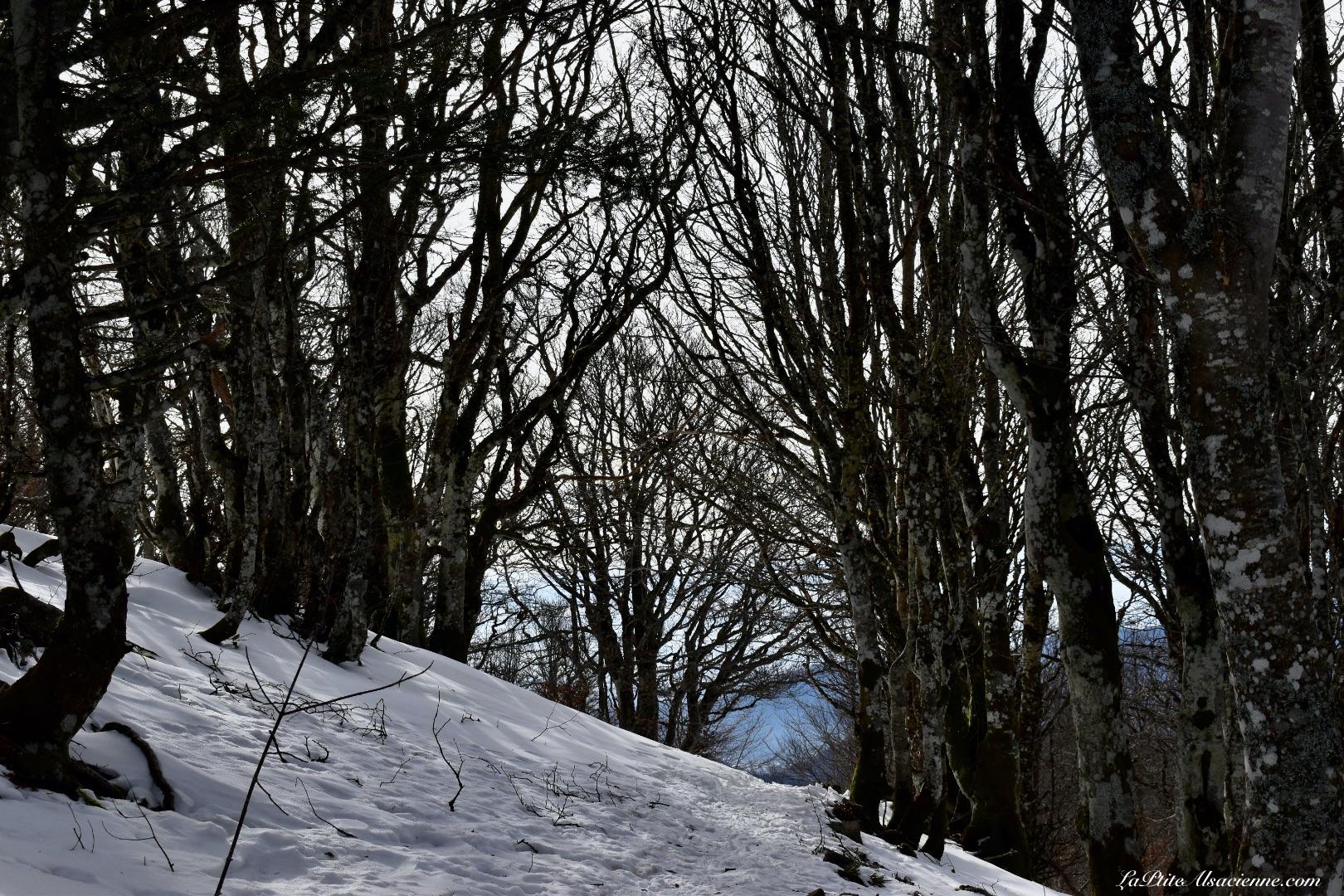 sentiers du Markstein - GR5 pour se rendre au Grand Ballon - Neige et ciel bleu - Photo du 16/02/2021 par Cendrine Miesch dite LaPtiteAlsacienne