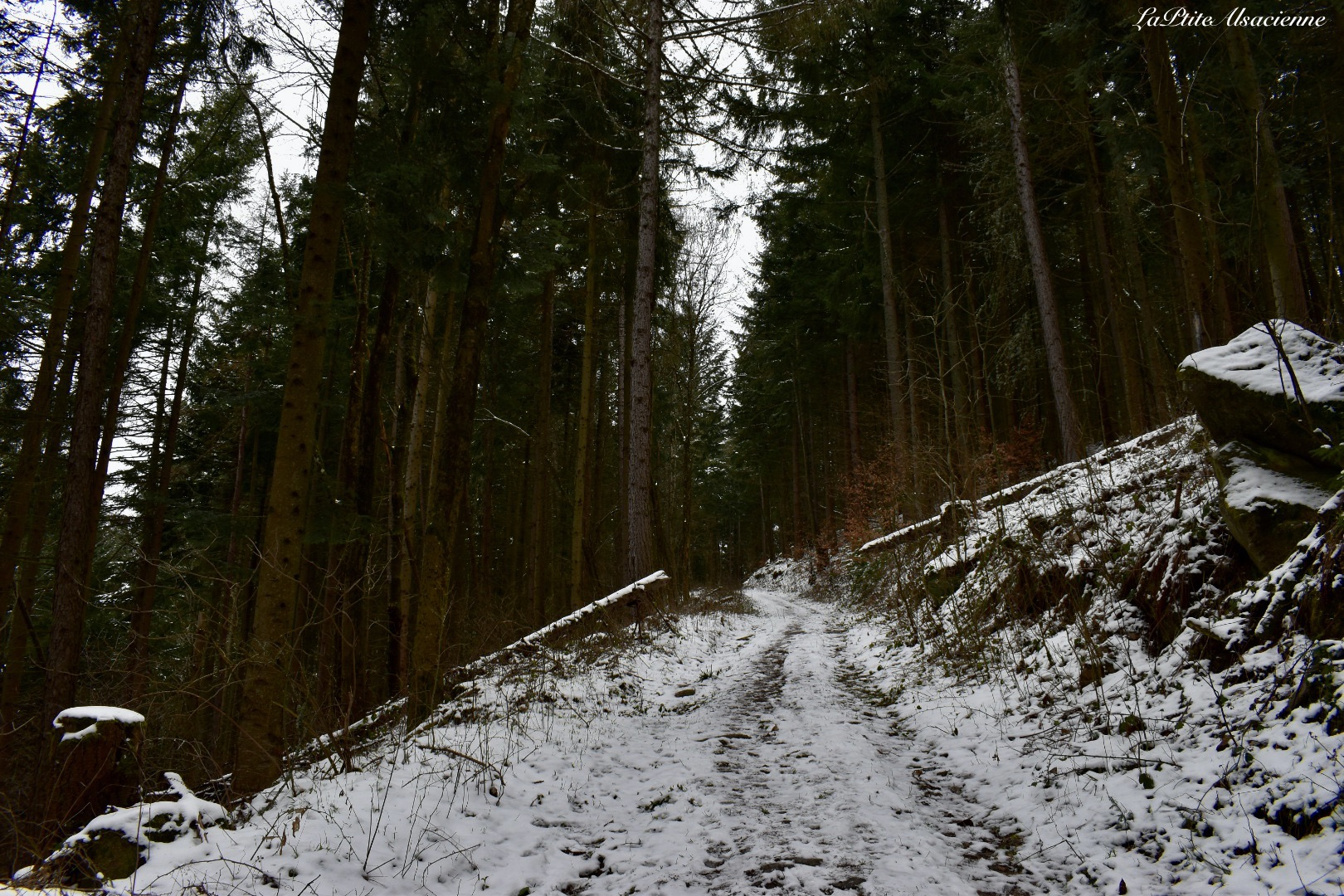 Sentier forestier sous une fine couche de neige à Wasserbourg pour monter au Petit Ballon