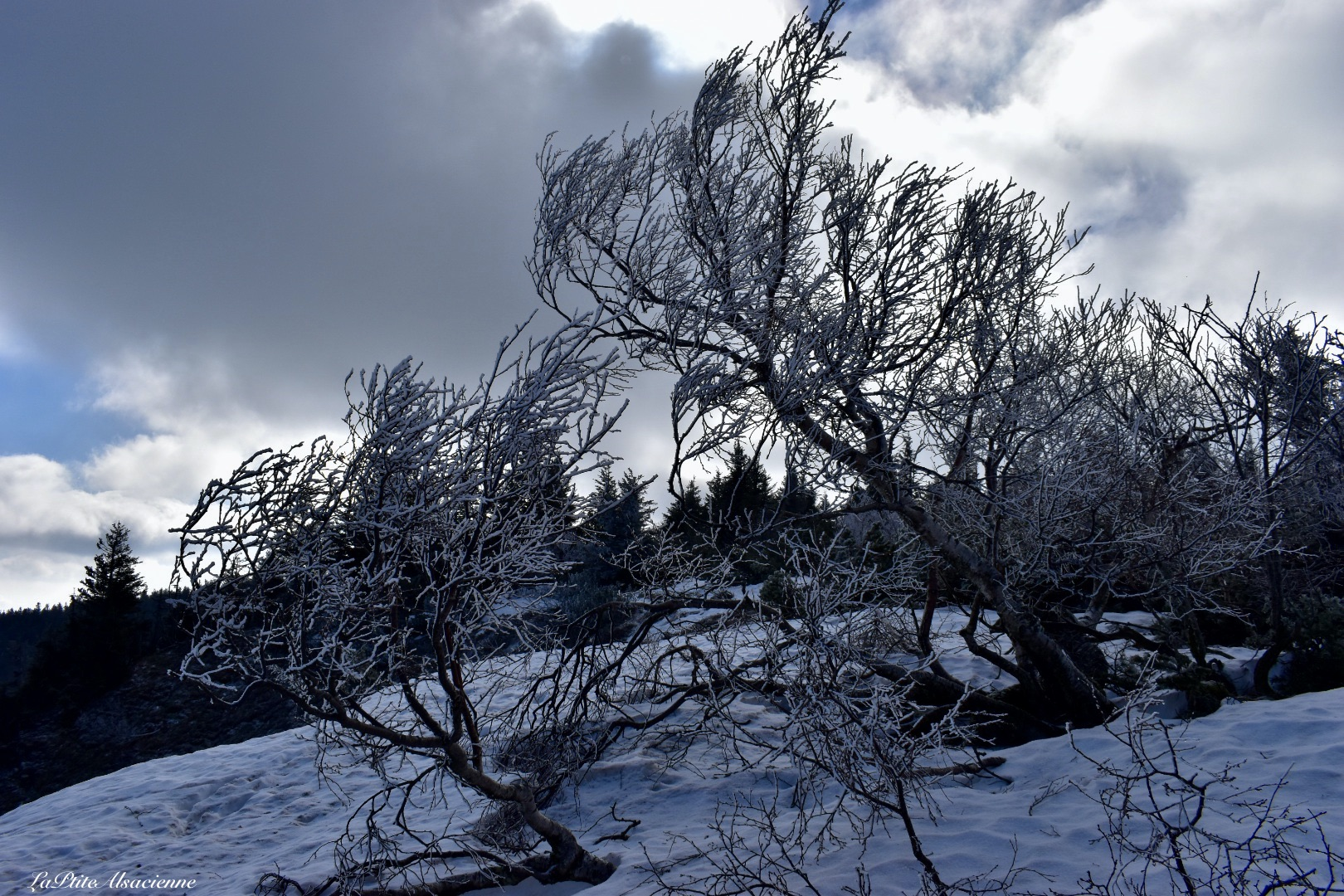 Les crêtes au-dessus du Lac Blanc, avec des arbres encore gelées en ce 27 février 2021
