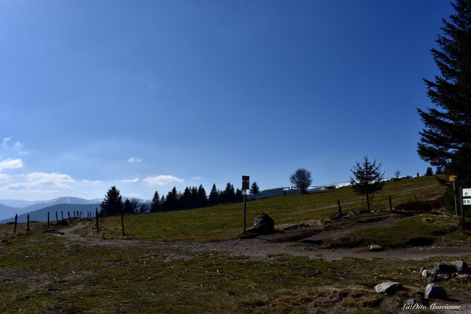 Lieu dit Kraywasen  ou aussi appelé la Quatscha Platzla - alt 1122m