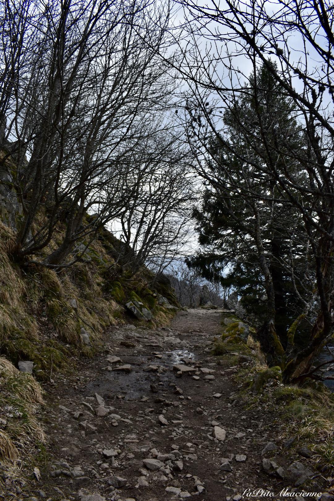 sentier vers ruine du hohrupf sous la neige