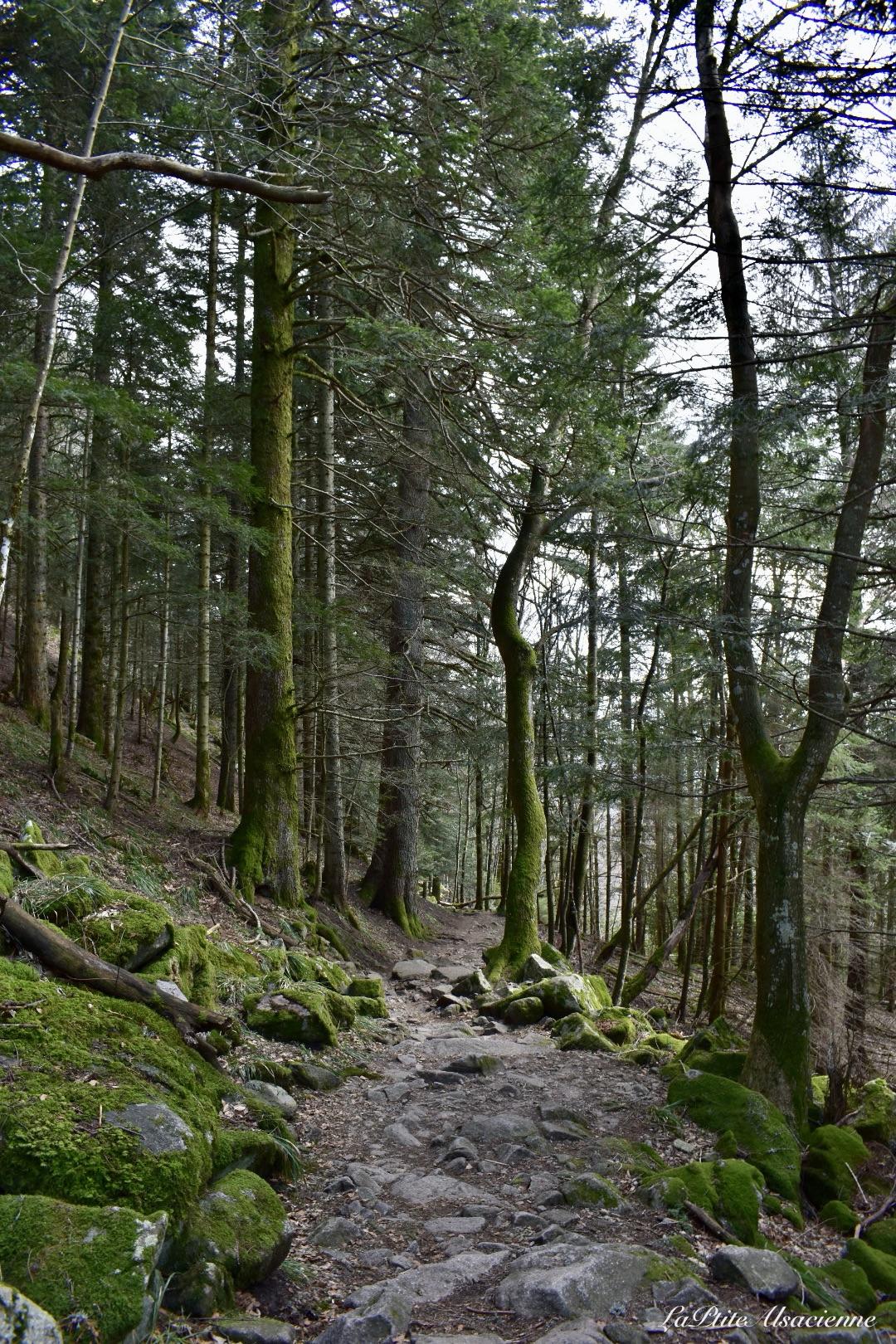 sentier enneigé vers Lieserwasen