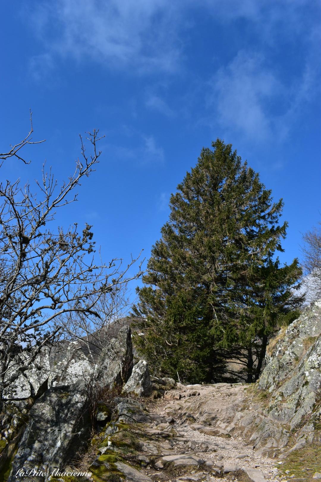 Sentier menant au Petit Hohneck et Hohneck et col du Schaeferthal - Photo by Cendrine Miesch dite LaPtiteAlsacienne