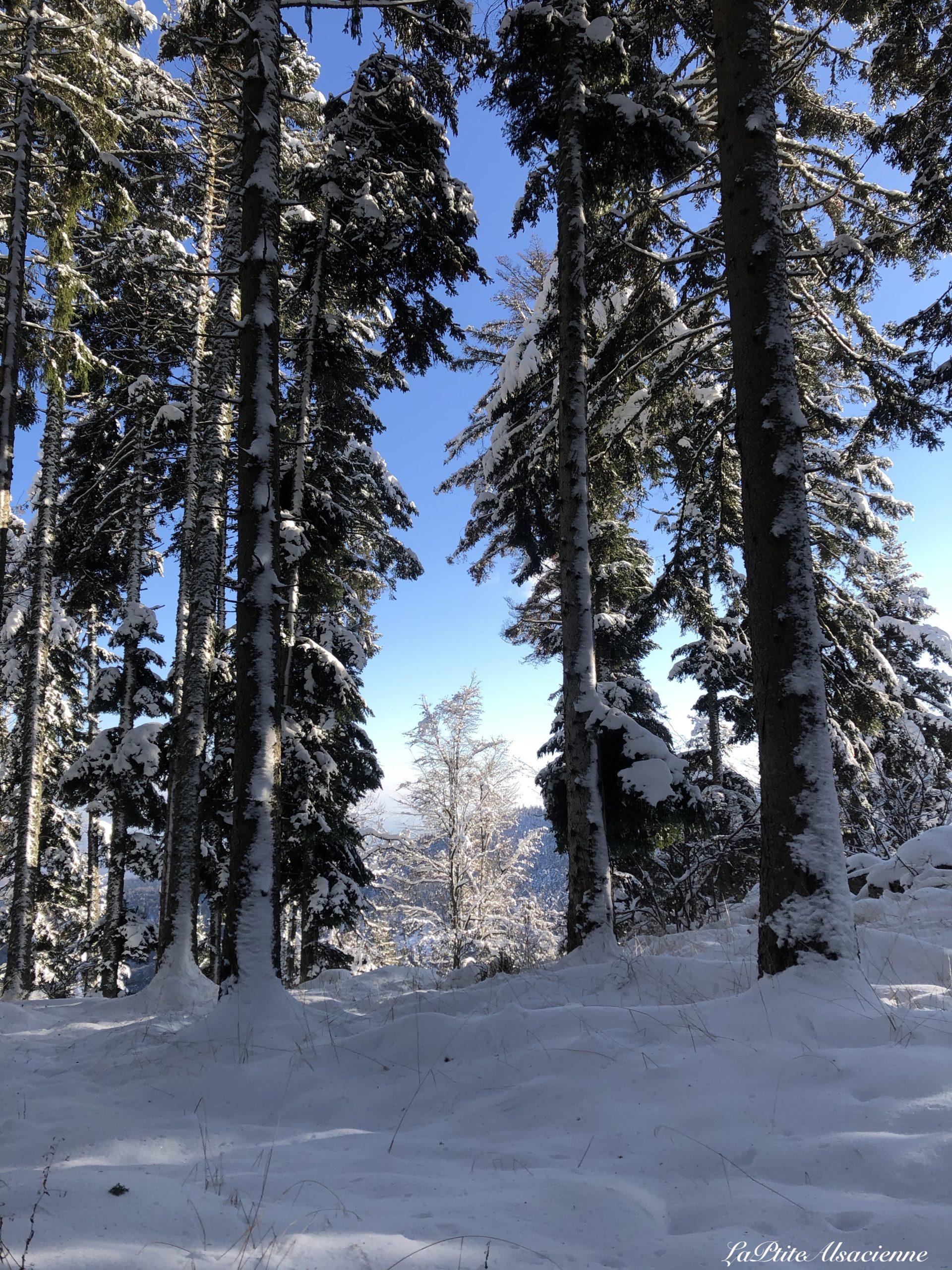arbres enneige et ciel bleu vers lieserwasen et judenhut