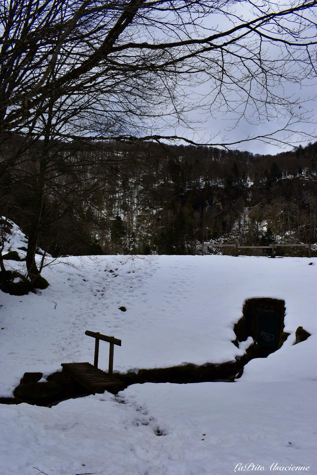sentier sous les sapins menant a l ebeneck