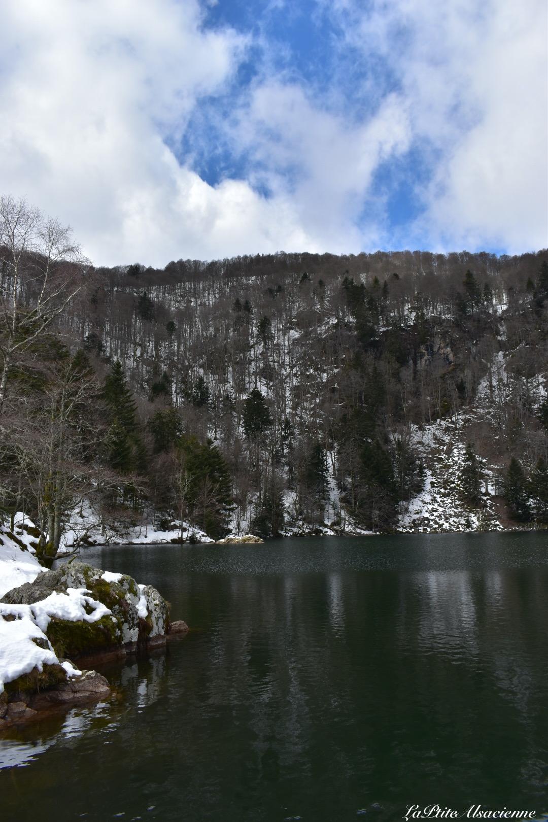 pommes de pins recroqueville sous le froid de la neige