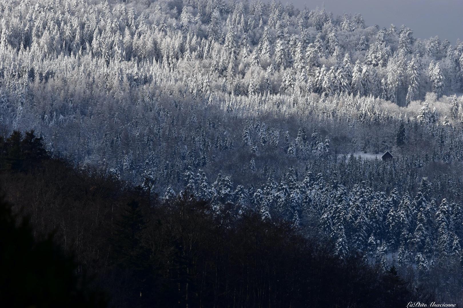 montagnes enneigees au dessus de Murbach