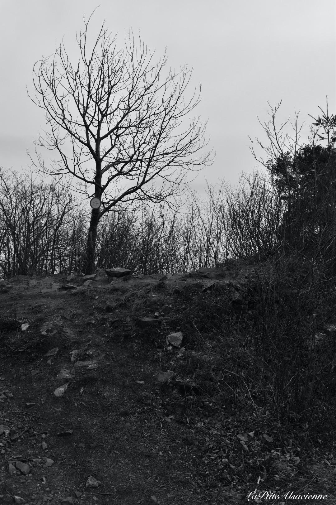 ruine du hohrupf murbach