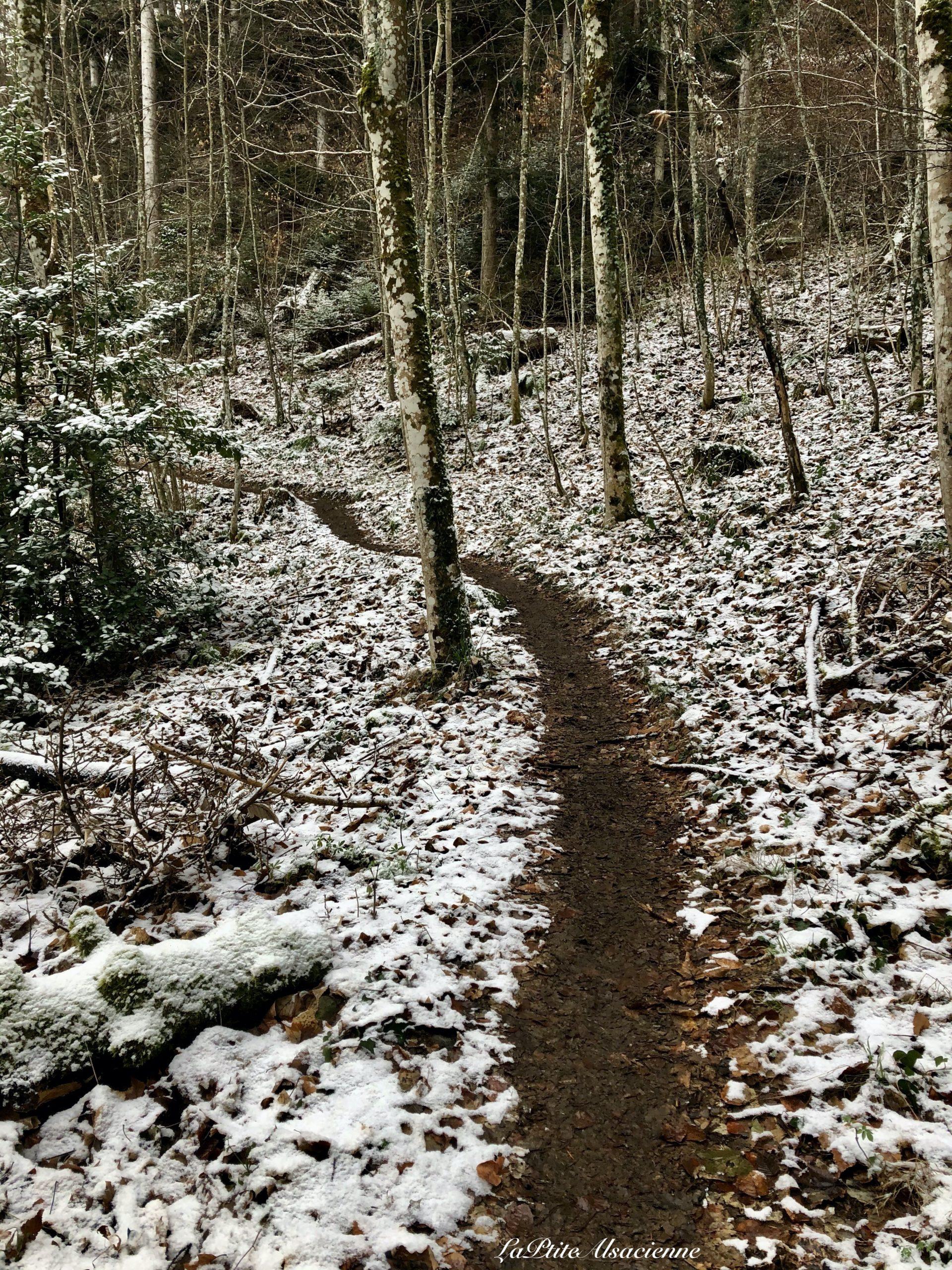 sentier qui monte vers le hohrupf a murbach
