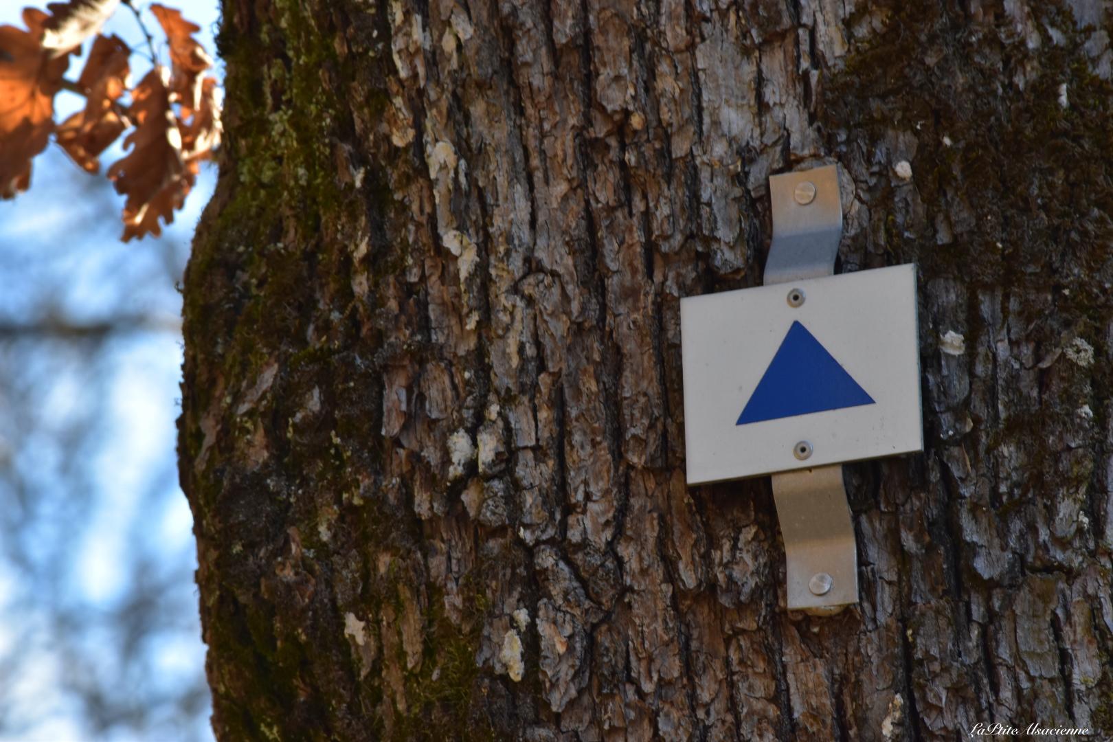 signaletique triangle bleu vers ruine chateau hohrupf murbach