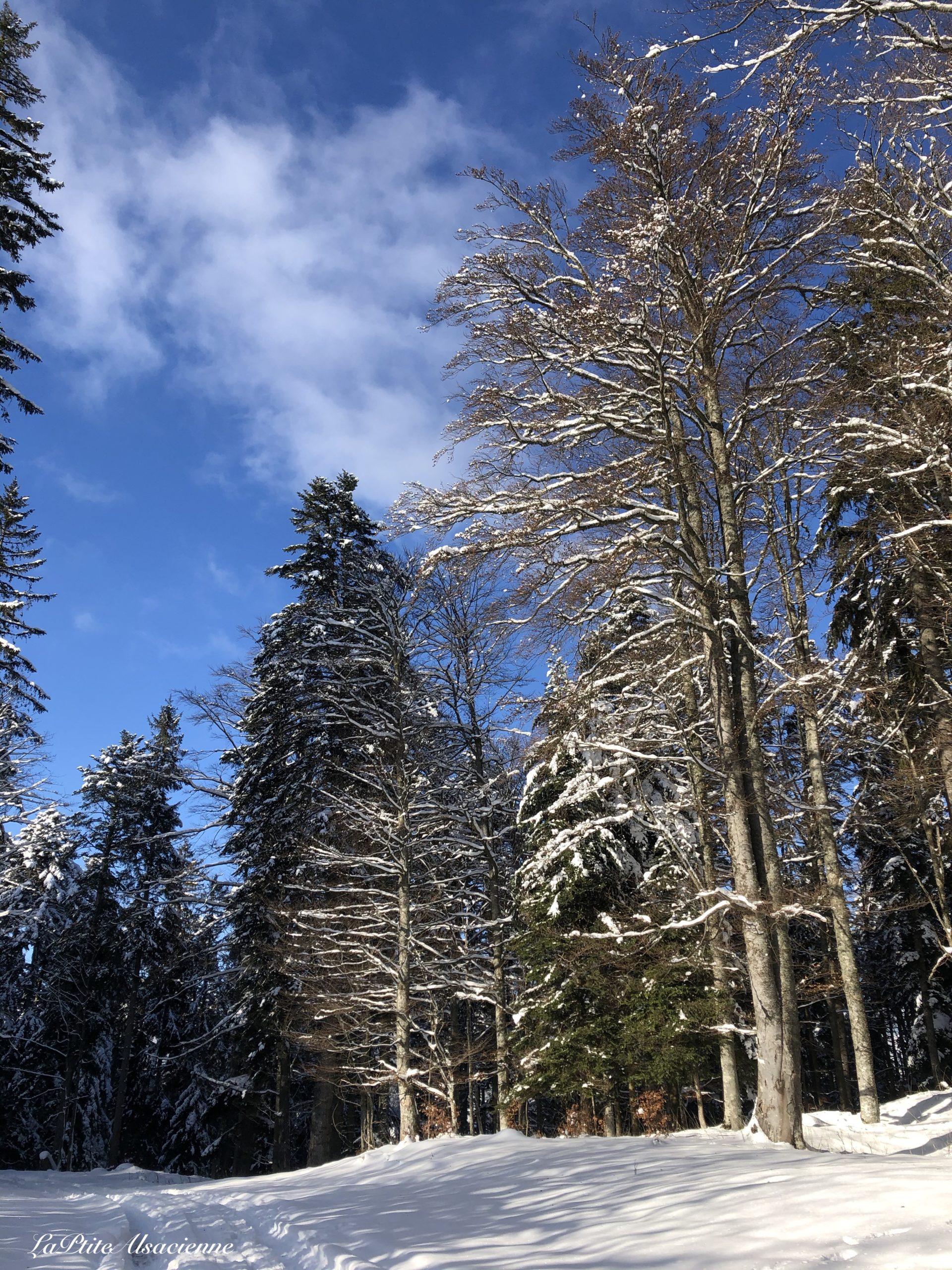 vers lieserwasen et judenhut neige et arbres et ciel bleu
