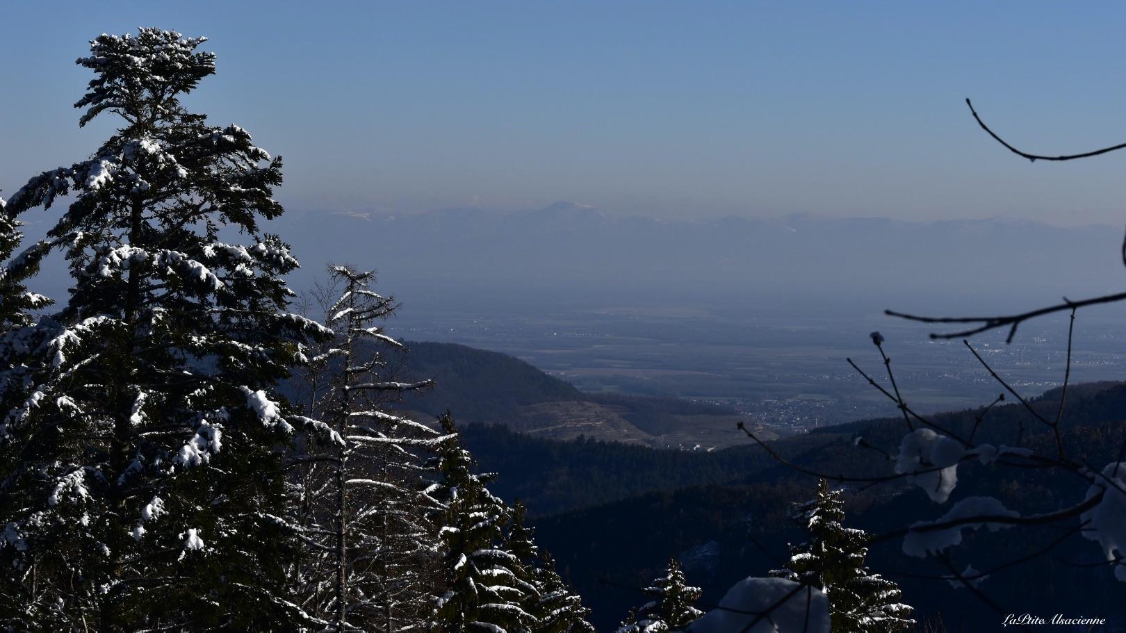 vue sur plaine alsace et foret noire et alpes sentier forrestier vers lieserwasen