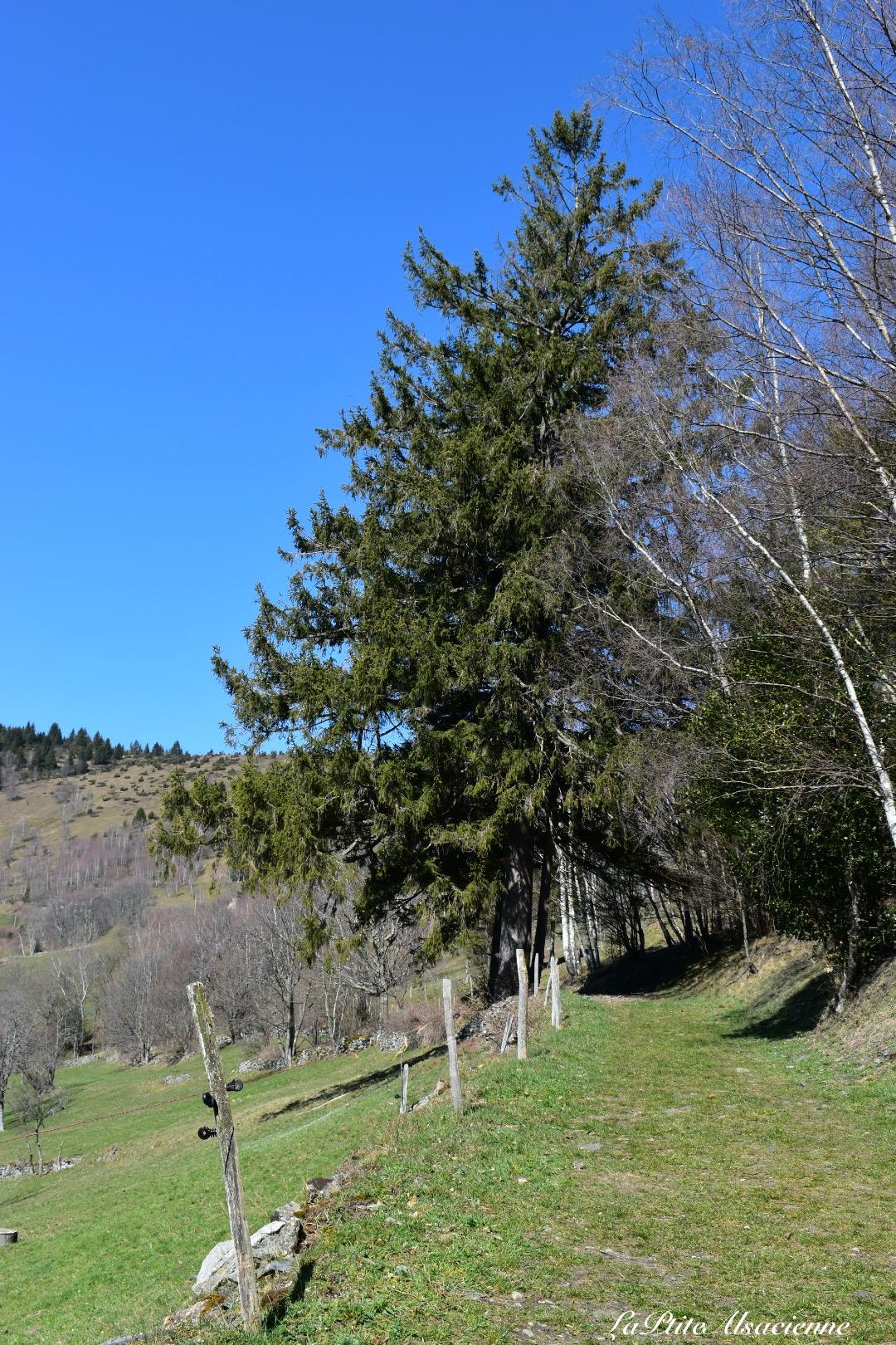 Sentier au dessus de l auberge Wicky du hilsen