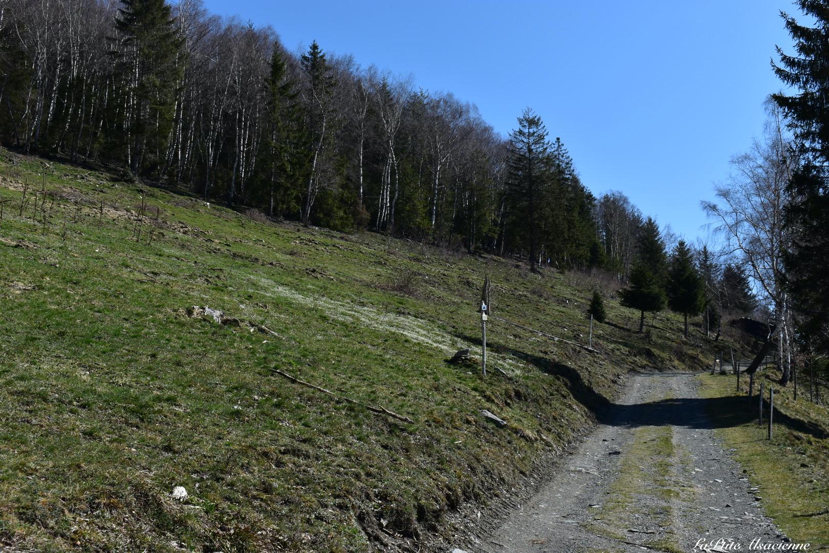 Prendre à gauche, le sentier direction le Bockwasen pour monter au Petit Ballon