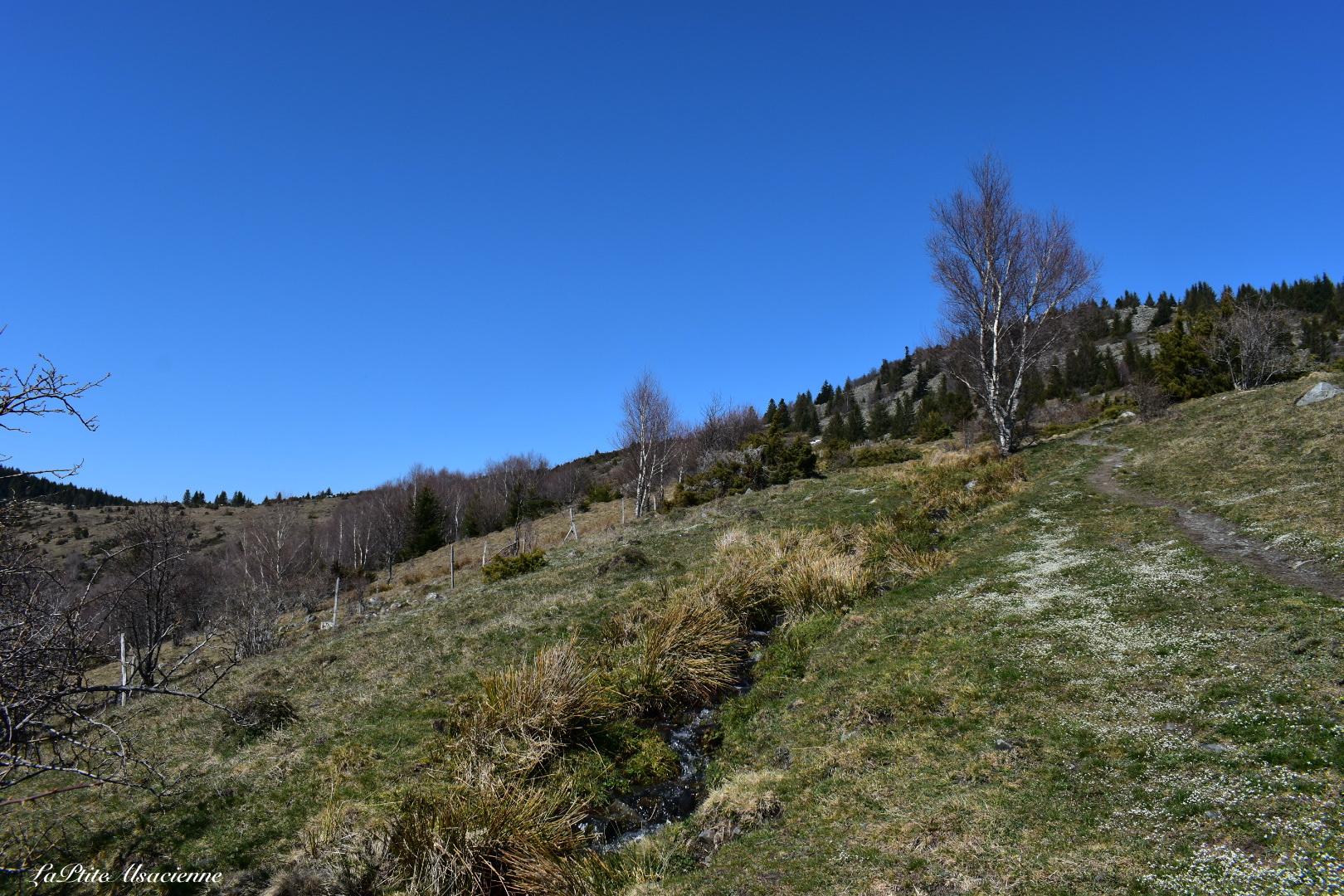 Sentier montant du Hilsen vers le Bockwasen pour ensuite monter au Petit Ballon