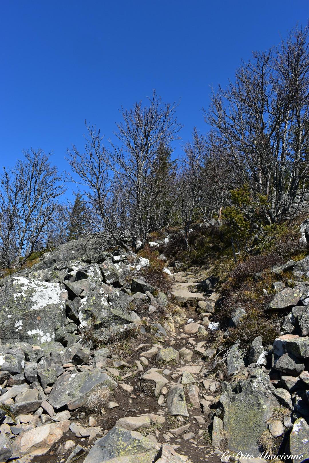 Sentier qui monte depuis le Hilsen vers le Wockwasen avant le Petit Ballon