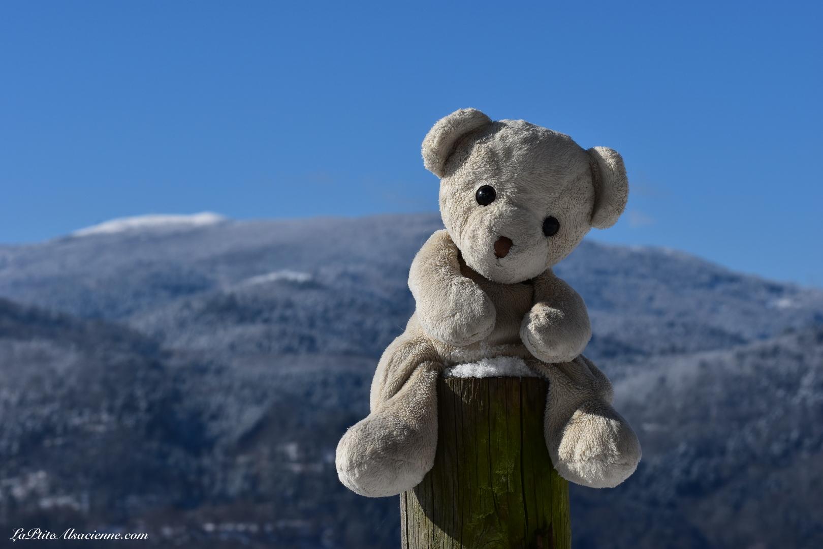 Doudou Sans Nom sur les hauteurs de Guebwiller avec une vue sur le Grand Ballon