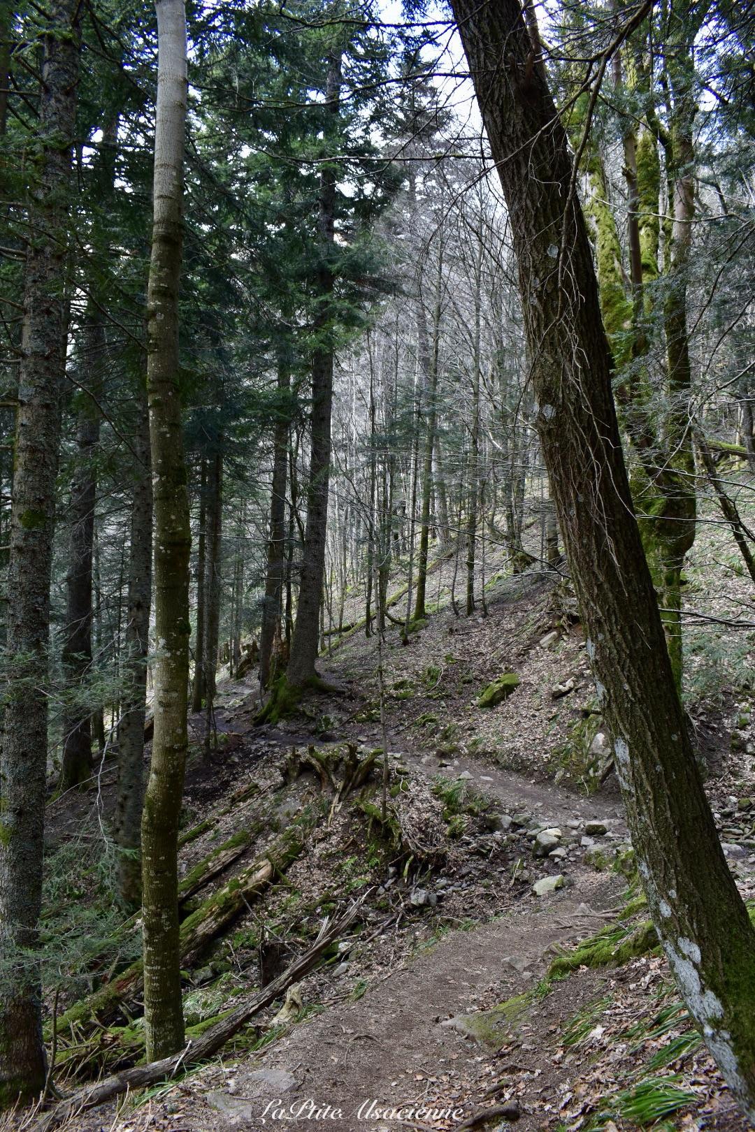 Descentes par le sentier depuis le Hohneck