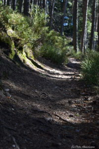 sentier vers le Grand Honnack
