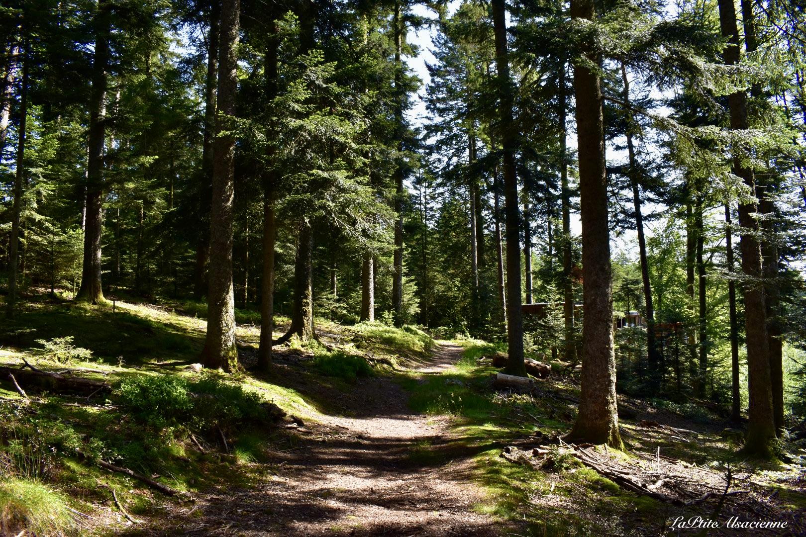 La forêt communale d'Herpelmont à Champdray, lieu où les Nids des Vosges sont installés. Photo de Cendrine Miesch dite LaPtiteAlsacienne