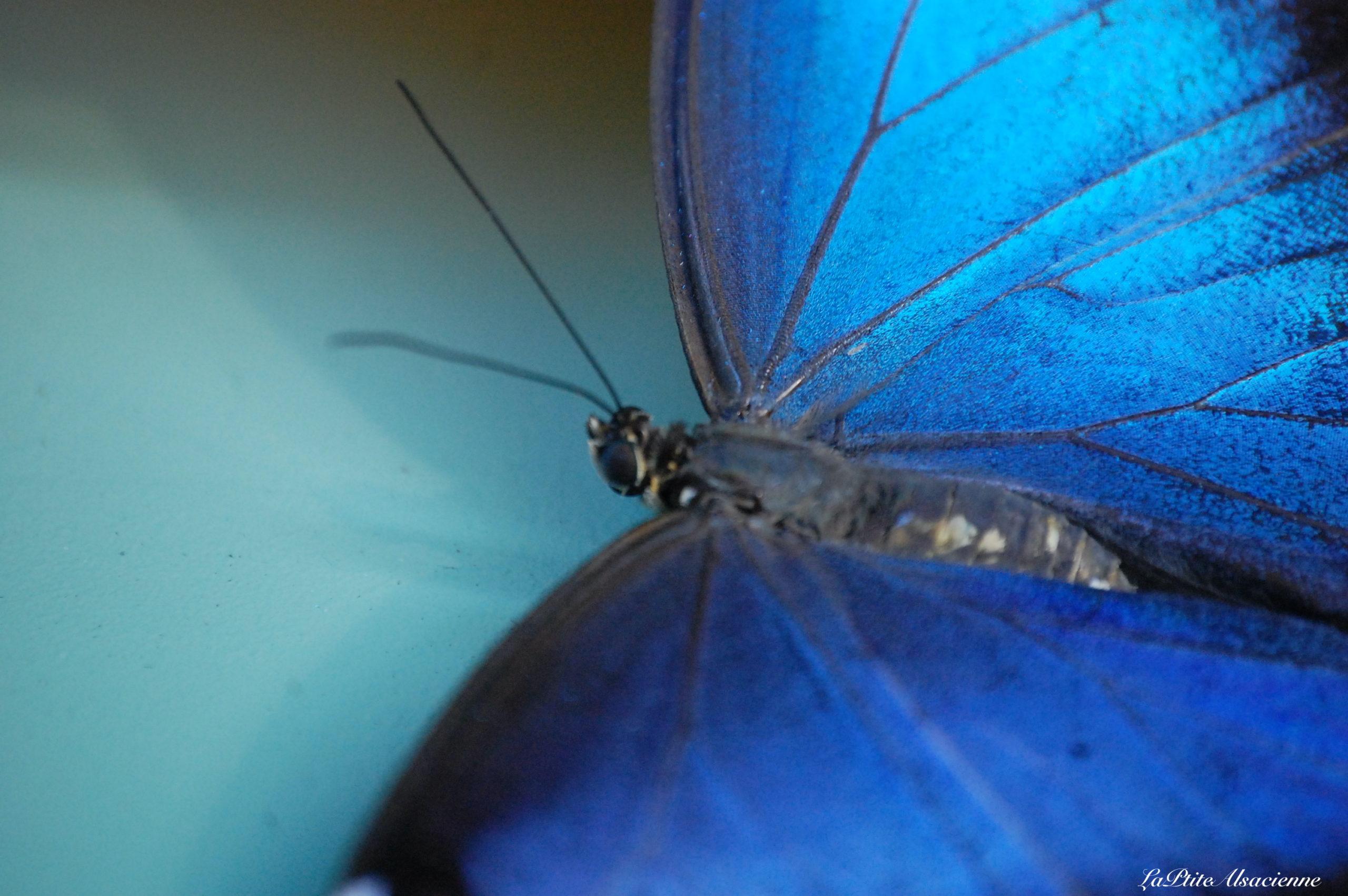 Jardin des Papillons à Hunawihr - Photo de Cendrine Miesch