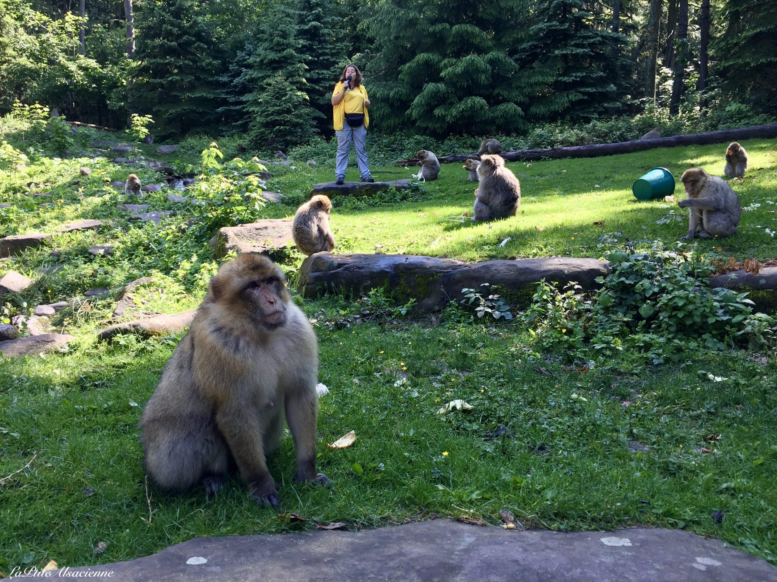La montagne des singes (mai 2018) - Photo de Cendrine Miesch